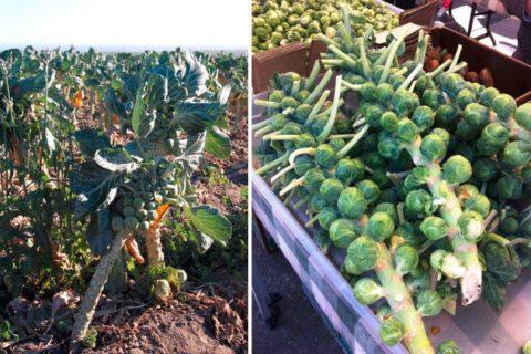 10 самых необычно растущих фруктов и овощей