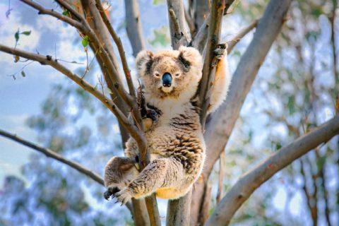 10 самых медленных животных в мире
