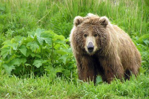 10 исчезающих животных, которые скоро могут стать вымершими