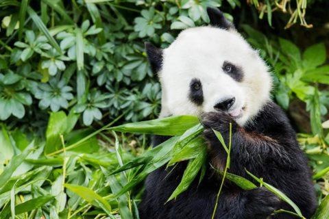 10 самых глупых животных в мире
