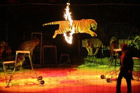 Самые известные катастрофы в истории цирка