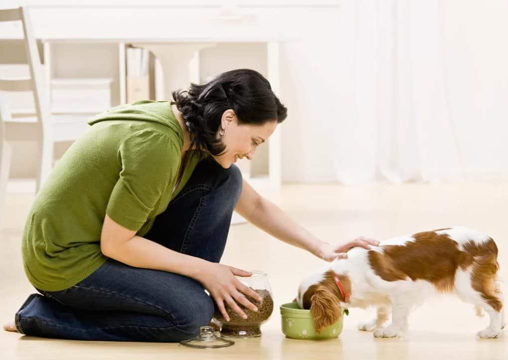 Уход за домашними животными картинки