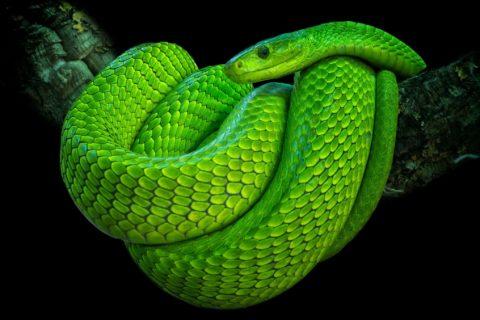 10 реальных змей в природе, которые выглядят фантастически