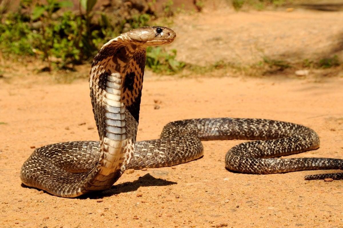 все все животные мира фото змея довольно сложно