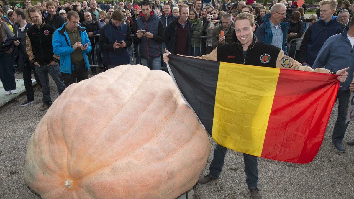 Самые большие тыквы в мире: сколько весит наиболее тяжёлый рекордсмен?