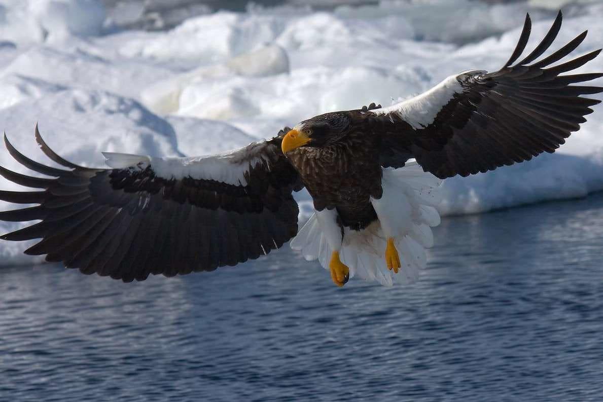 Птицы россии в картинках с названием надо бояться