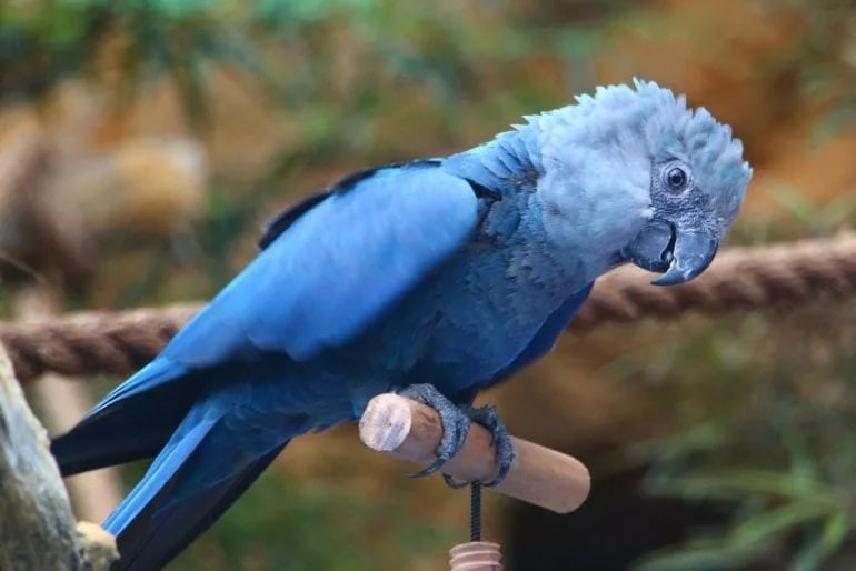 Большие попугаи породы