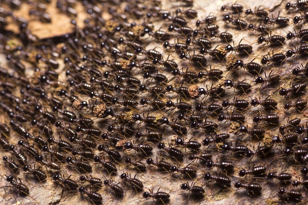 много муравьев фото поддержала
