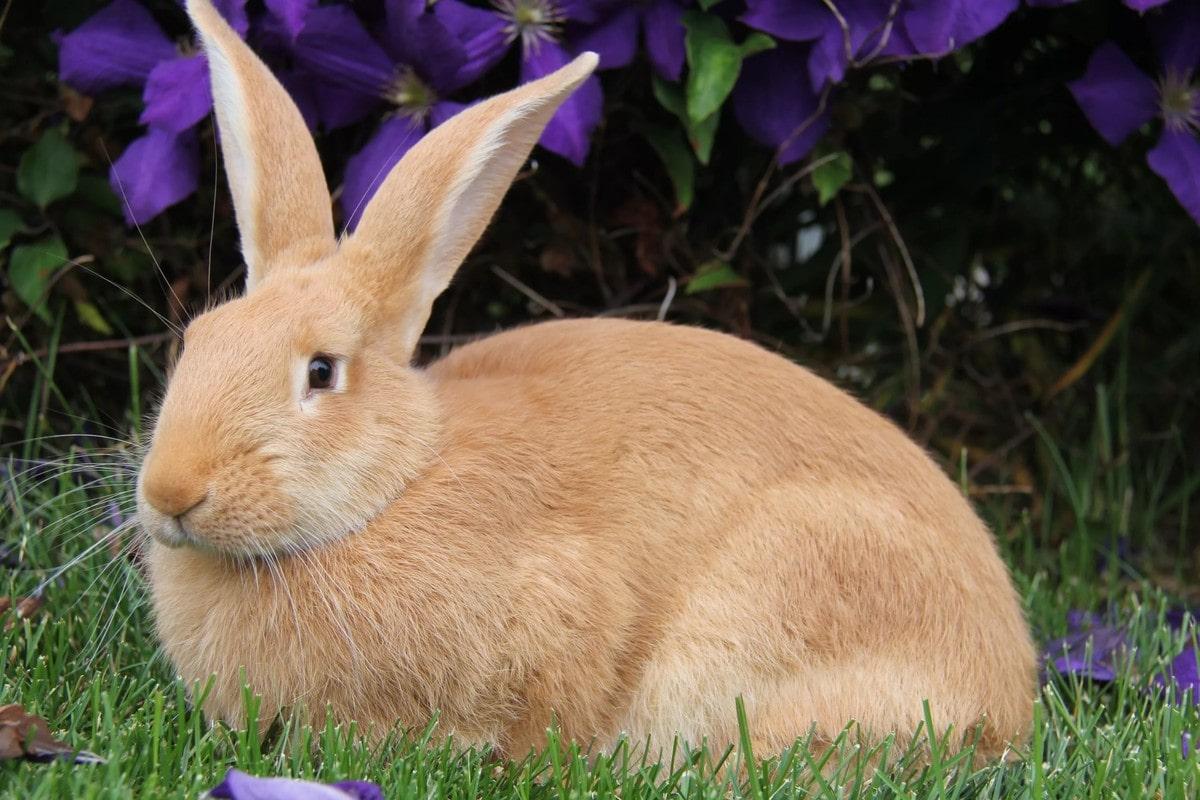 Про кроликов картинки